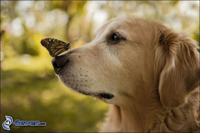 Comment s'appelle le nez du chien ?