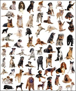 Quelles sont les 4 catégories de races de chiens ?
