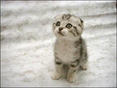 Le chat a environ 250 os :