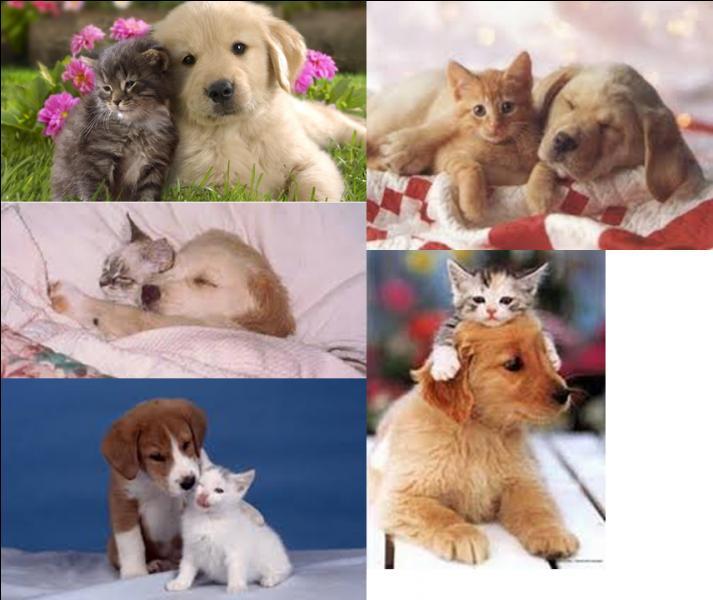 Et pour finir, le chien et le chat peuvent-ils cohabiter et bien s'entendre ?