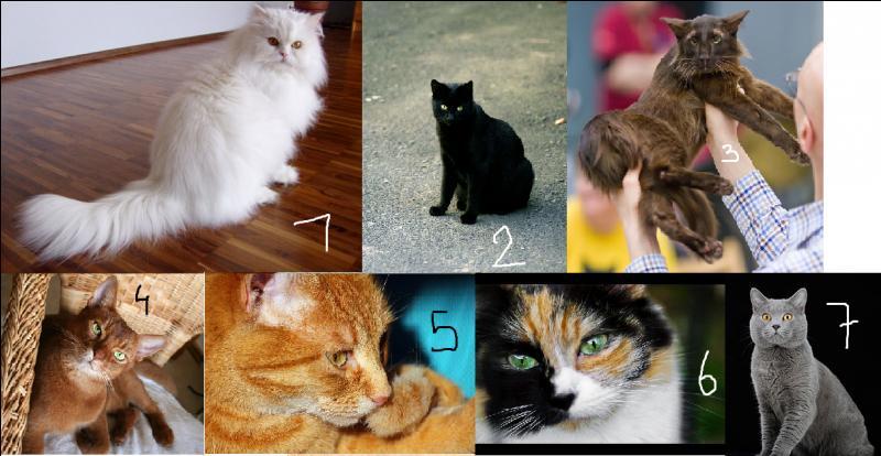 Comment s'appellent les différentes robes de chats ?