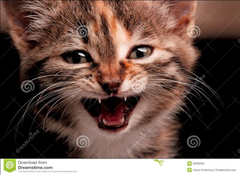 Comment appelle-t-on les longs poils présents sur les moustaches, sur les pattes, sous le menton et sur les sourcils des chats ?