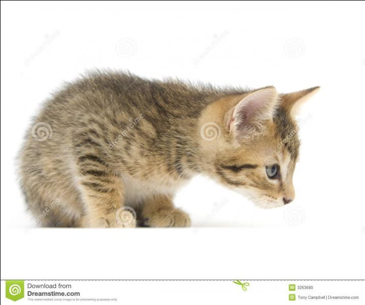 Le chat a un sixième sens. Comment s'appelle-t-il ?