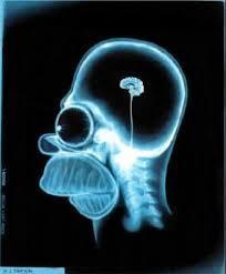 La culture ça vous creuse le 'cerveau' !