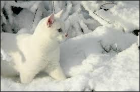 Comment se nomme la mère de Patte de Givre, chaton sourd du Clan du Tonnerre ?