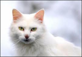 Quel chat, Étoile de Tigre tue-t-il, et pour quoi faire ?