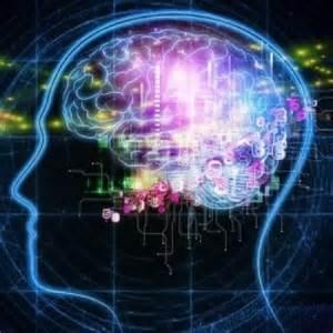 Les parties du cerveau