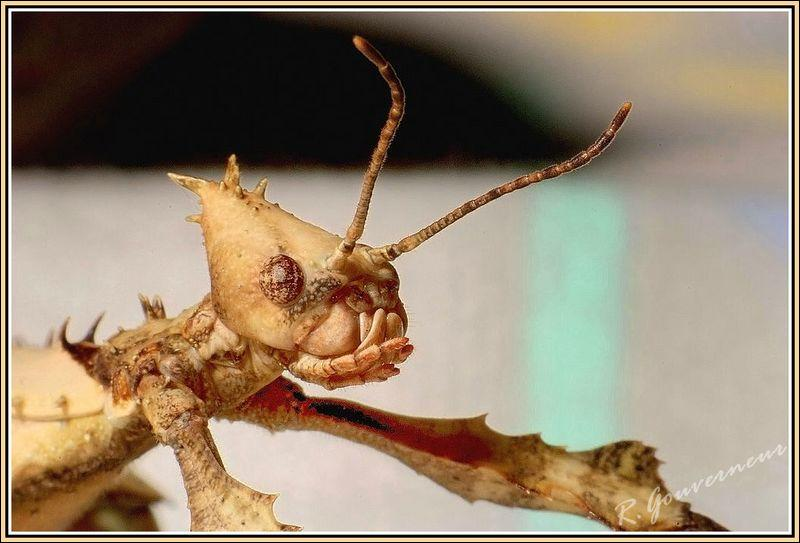 Quel est l'insecte le plus long du monde d'après les scientifiques ? 37, 5 cm