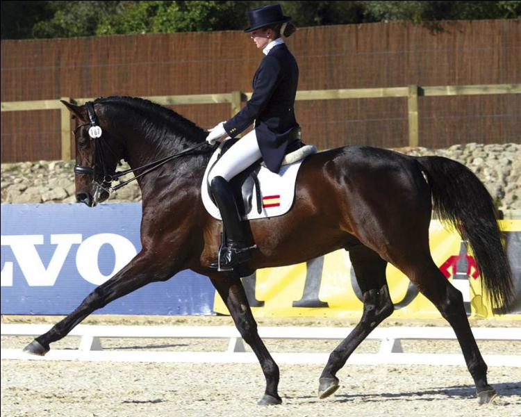 Image result for dressage equitation cabrer