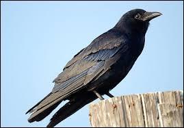 Comment appelle-t-on cet oiseau ?