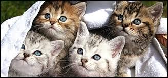 Lequel de ces groupes musicaux n'a jamais fait une chanson sur les chats ?