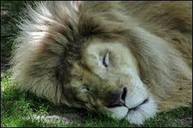 Dans une chanson d'Henri Salvador, quand est mort le lion ?