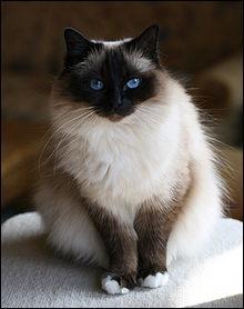 Quel chat suis-je ? 1
