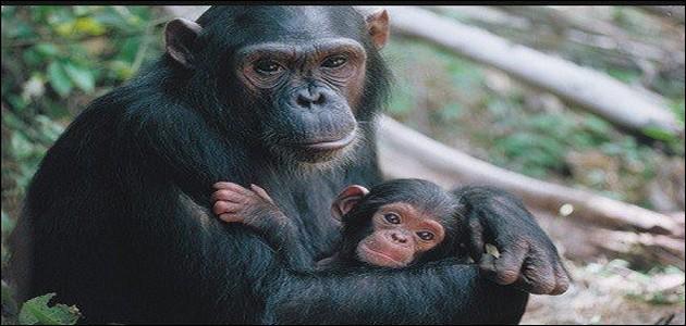 Trouve le nombre de lettres contenu dans le nom de ce primate !