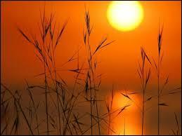 D'après une chanson de Claude François, quel jour de la semaine est au soleil ?