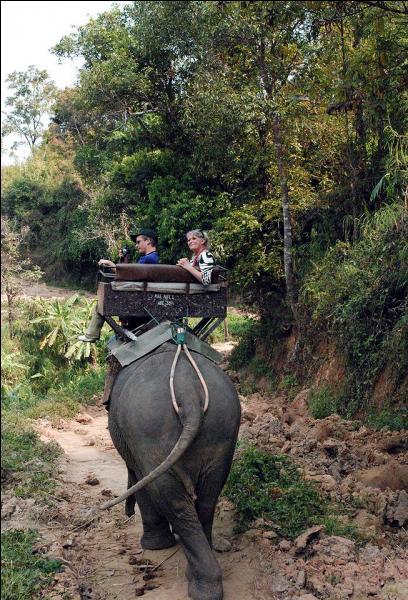 La réponse est éléphantesque, mon cher quizzeur, cherche-la dans les Alpes !