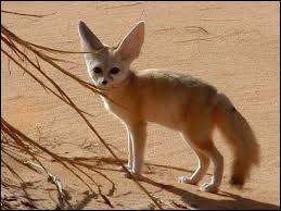 Cherchez, dans le désert, le nom d'un rusé germain...