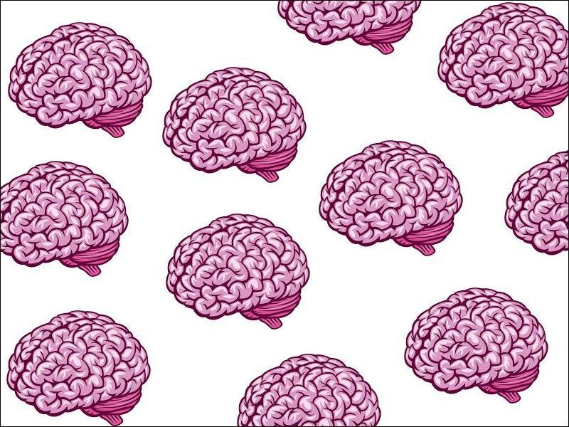 En combien d'hémisphères le cerveau est-il séparé ?
