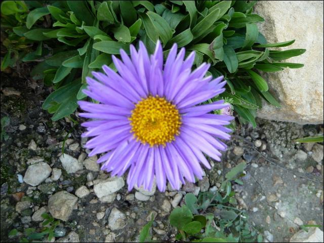 Quelle partie de la fleur forme le calice ?