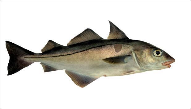 Le haddock est un poisson fumé, quel est son nom ?