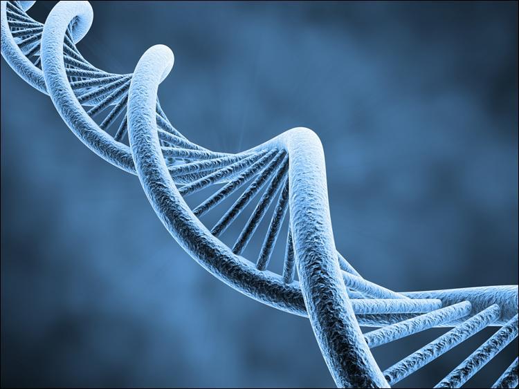 [Science et nature] Sous quel nom est plus connu l'acide désoxyribonucléique ?