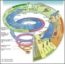 En géologie, l'échelle des temps géologiques est utile pour connaître l'histoire géologique de notre planète. Elle divise cette histoire en différentes périodes se regroupant en unité de temps plus grandes, nommées ères. Dans quelle ère géologique vivons-nous ?