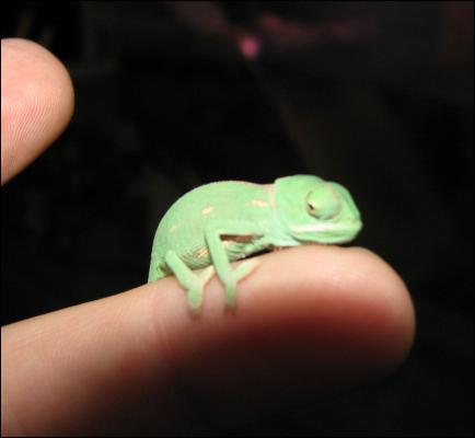 C'est à Madagascar que l'on trouve le plus d'espèces différentes, trouvez les deux dernières lettres de son nom !