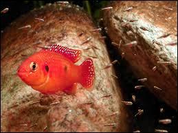 Le petit du poisson est appelé :