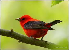 Lequel de ces noms appartient à cet oiseau ?