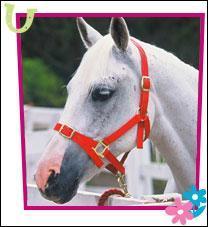 Quel est ce cheval?