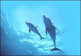 Les dauphins quiz qcm mammiferes dauphins - Combien de temps dure les coups de soleil ...