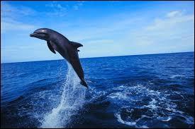 Comment dit-on  dauphin  en espagnol ?