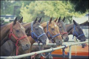 Pour aborder un cheval attaché, il faut :