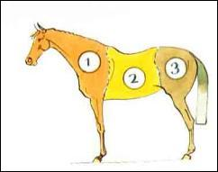 Les 3 parties du cheval sont :