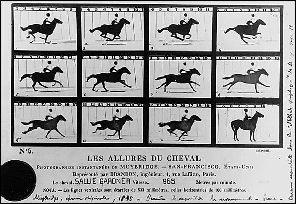 Combien le cheval a-t-il d'allures ?