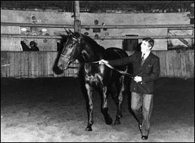 Jappeloup de Luze était un cheval de course.