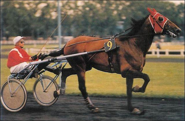 A quel âge est mort Bellino II, cheval de course français qui a remporté de nombreux prix ?