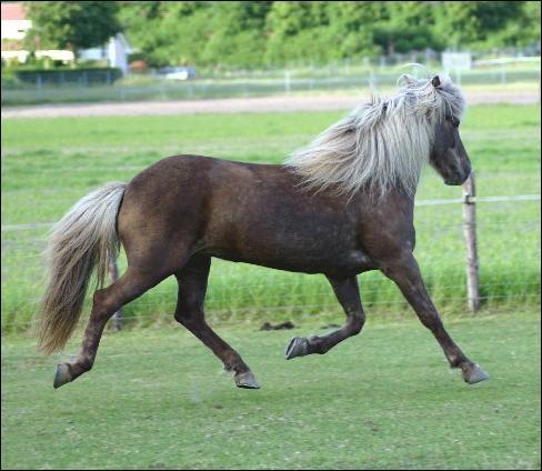 Ce cheval est porteur du gène silver. Vrai ou faux ?