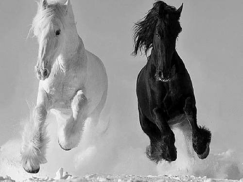 Orthographe des robes de chevaux