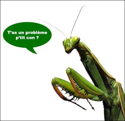 Il était une fois dans l'ouest, un petit scarabée !