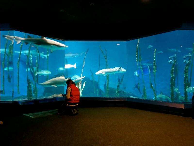 Dans ce monde merveilleux de conte de fées nagent les poissons. Ils sont dans... !