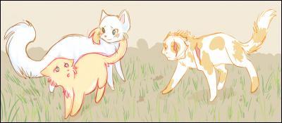 De qui la chatte (réponse en haut) est-elle amoureuse ?