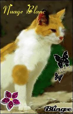 Quels chats la retrouvent en premier ?