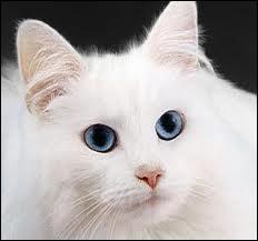 Quels chats sont nommés guerriers avant elle et d'autres apprentis, alors qu'ils ont le même niveau ?