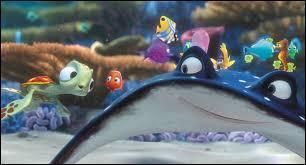 Quelle est l'espèce du maître de Nemo ?