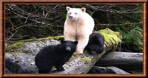 Une région très nature : parcourue par l'ours esprit !