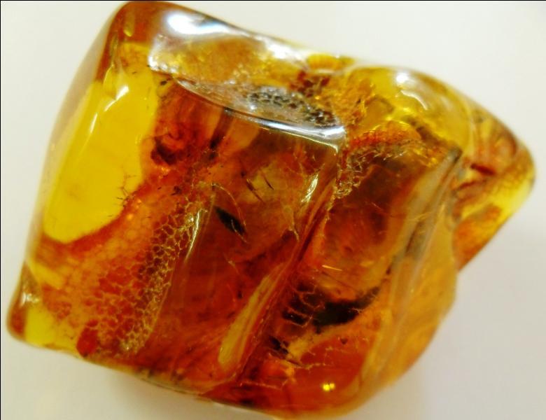 D'où provient l'ambre ?