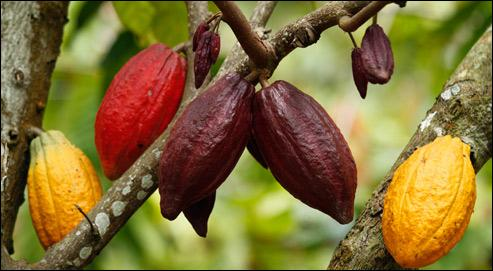Que sont ces fruits indispensables à une boisson chaude bien connue ?