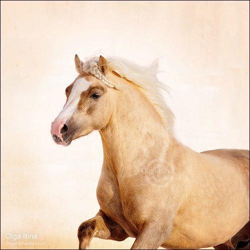 Et pour finir, quelle est la race de ce poney ?