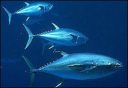 Quel est le nom de ce banc de 3 poissons ?